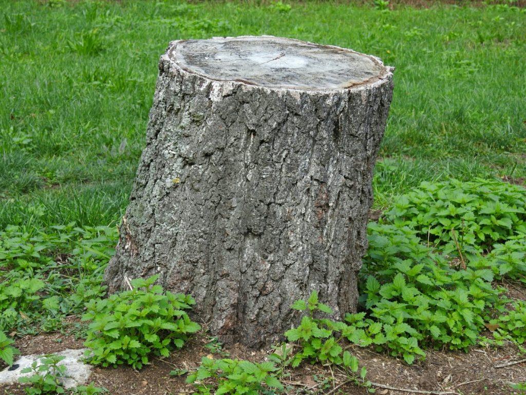 Borttagning av trädstubbar – Är det ett GDS-projekt eller ska man anlita proffs?
